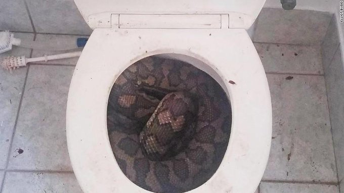 RT @CNN: Beware, dry weather in Australia may be causing snakes to slither into toilets: http://t.co/64DOQsue2K
