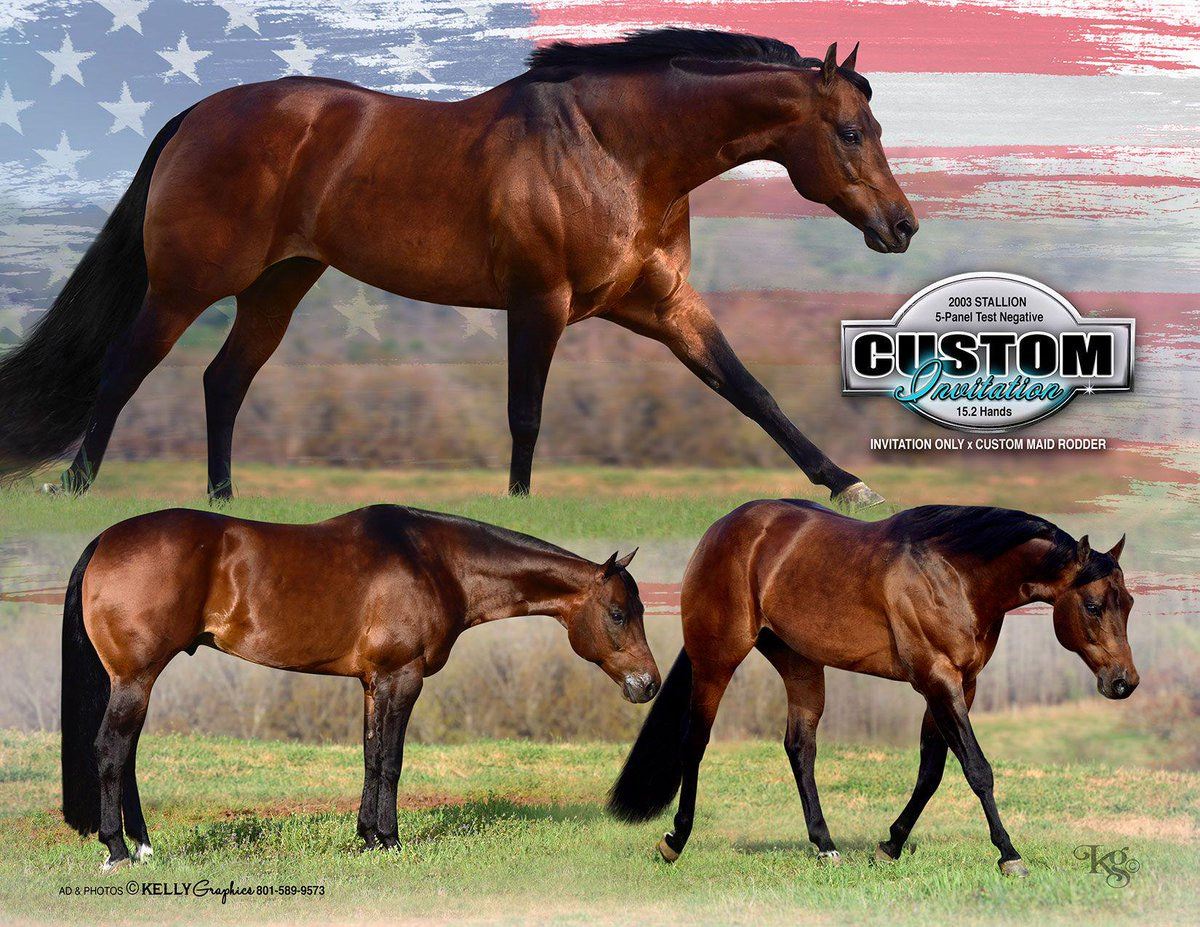 Custom invitation custominv twitter check out custom invitation at the cooper qtr horses booth at congress to be entered for a free breeding giveawayspicitterdmu4gwnn30 stopboris Choice Image