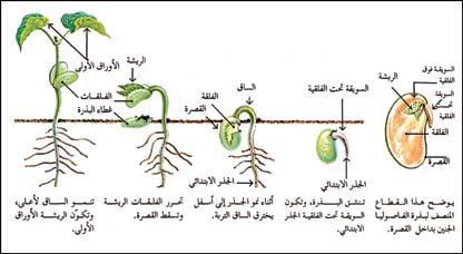 كتاب فلاي ليدي بالعربي