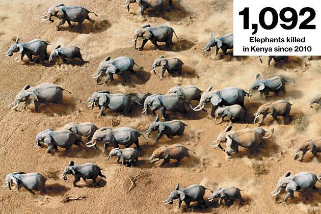 Strage di elefanti in Kenya.