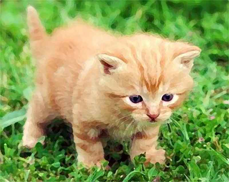 Alberto Camerra On Twitter Aaa Cercasi Gatto Rosso Cucciolo