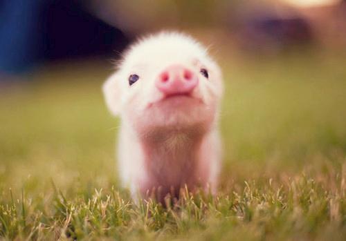 Fuzzy pink piglet. http://t.co/Zu16sxA7qS