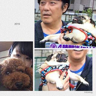 パグぞう可愛い〜 プリンくんも負けずに可愛いけど、テンション上がりすぎて全然写真撮れない〜 #pug #toypoodl #犬 #ぱぐぞう #ぷりん #せわしい http://www.findelight.net/puggie_detail.html?id=1077352395767576068_1110227332…pic.twitter.com/UK4IRkir5I