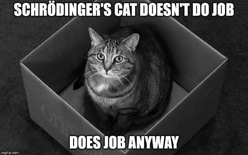 Schrodingers Cat Doesn T Do Job Does Job Anyway