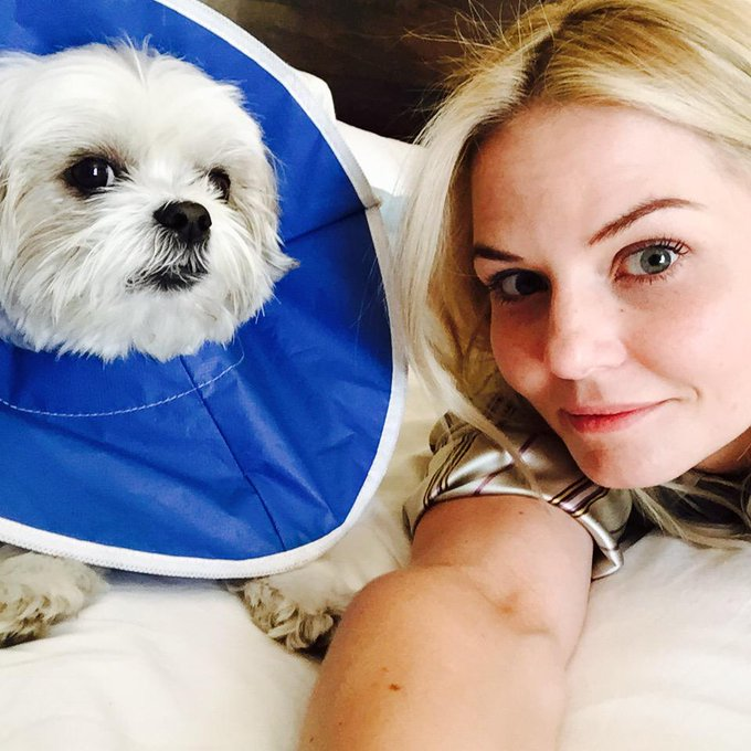 Day 9: reunited and it feels so good. But Ava may kill me if I don't take this cone off soon. #101smiles