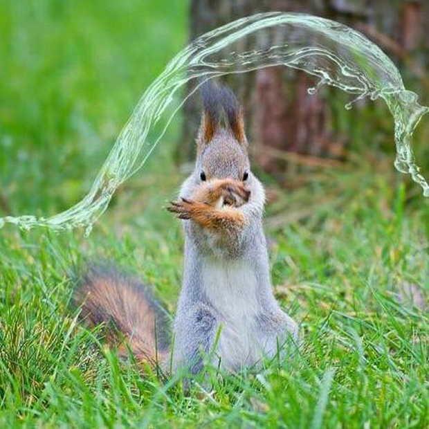水を操るリスが発見される。 pic.twitter.com/PMw4Yjee0v