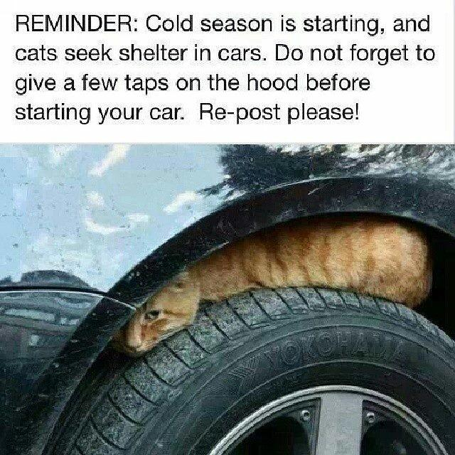 Very important cat business. http://t.co/flpU9K3UpO