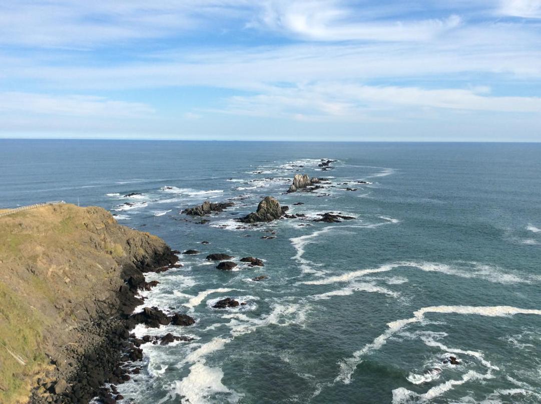 襟裳岬に生息してるゼニガタアザラシ(裸眼じゃ見えん http://t.co/rIrA2TxAQP