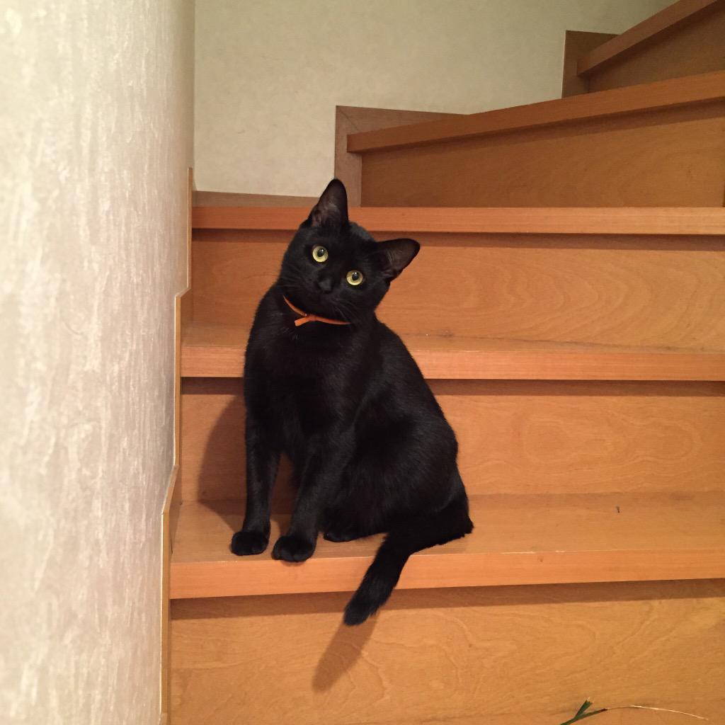 #繋がらなくていいから俺の猫に見られてくれ http://t.co/22vEk8VpKd