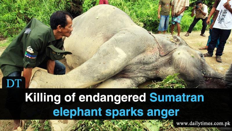 La morte dell'elefante Yongki in Indonesia.