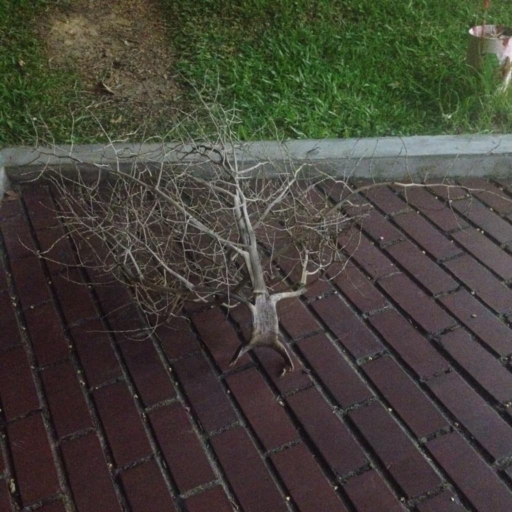 こいつは確実に何かしらの理由で木にされちゃった奴だ pic.twitter.com/nQUdnAOGp8