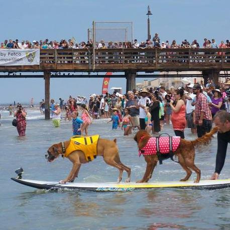 Pawabunga! We can't wait for @HB_SurfDog this weekend in #HuntingtonBeach: http://t.co/iarbThOggB http://t.co/21X7kzxbfy