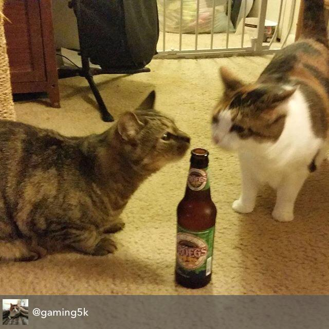 #beercats checking out @TroegsBeer. 2 against 1, we like those odds. Pop that top! http://t.co/XZU5HPV2Tx