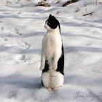 ペンギン検索してたら…モフっとした新種の激カワペンギン発見したった!