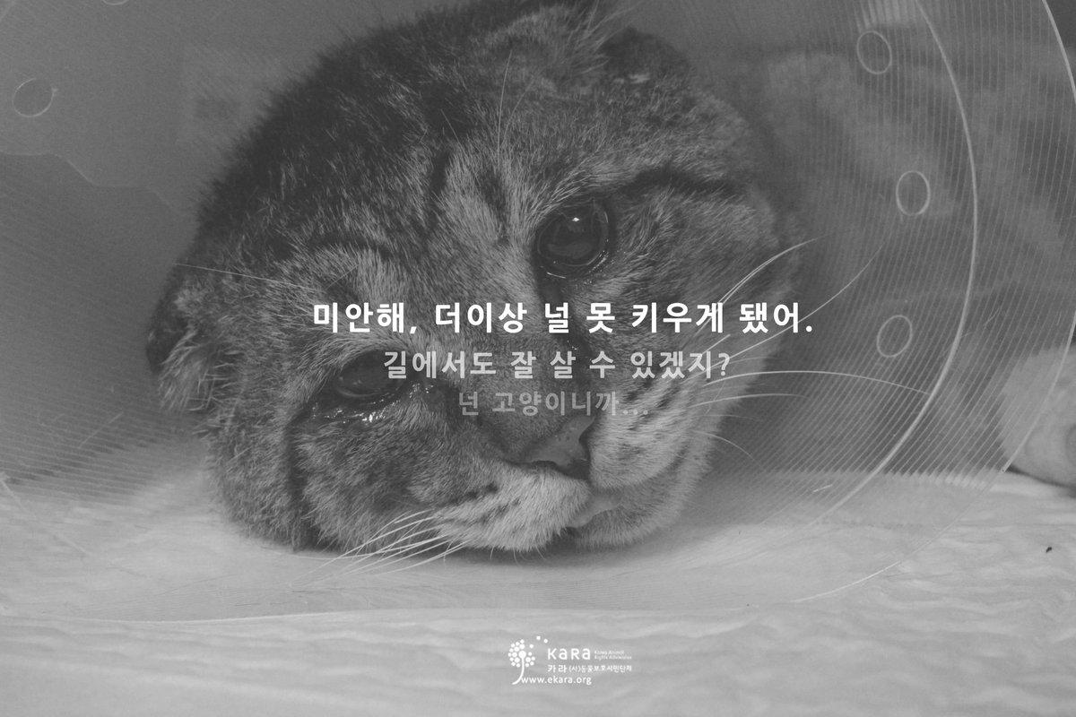 이번주 금요일 (9월 25일), 생명을 살리는 여러분의 30분을 투자해주세요. EBS 하나뿐인지구 - 길고양이편이 방송됩니다. http://t.co/2q3WtqrCKf