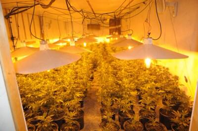 Ladyguedin on twitter home sweed home for Culture de cannabis en interieur