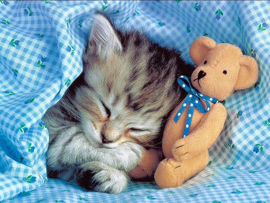 Поздравление, картинки спокойной ночи с животными и надписями