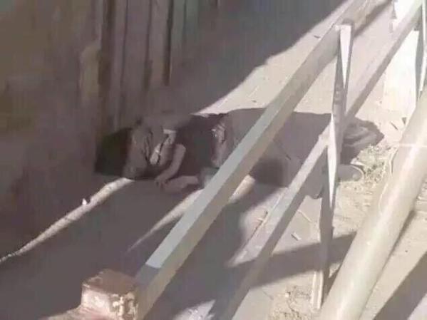 فلسطينية مرابطة نقابها ورفضت التفتيش فقتلها الصهاينة الكلاب CPhlfP3WsAAZ99O.jpg
