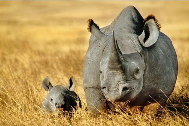 Today is #WorldRhinoDay! To celebrate, learn more about these amazing, endangered creatures: http://t.co/dcSwMO3mTk http://t.co/LSP7Sz6tjc