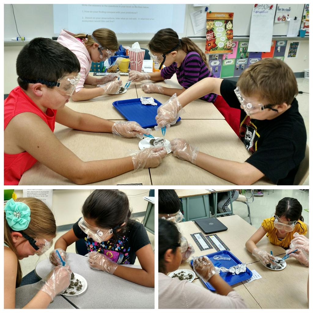 #Inquiry !  So full of questions.  #ngss #wdsd7 http://t.co/p8ql5xuoIE