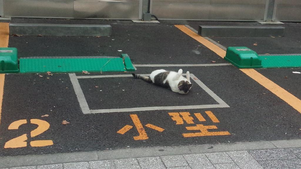 駐車場は戦略的占領をされました pic.twitter.com/xjyBNKUalz