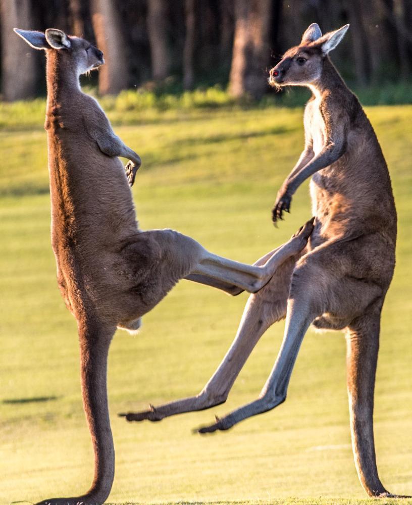 The West Australian on Twitter: