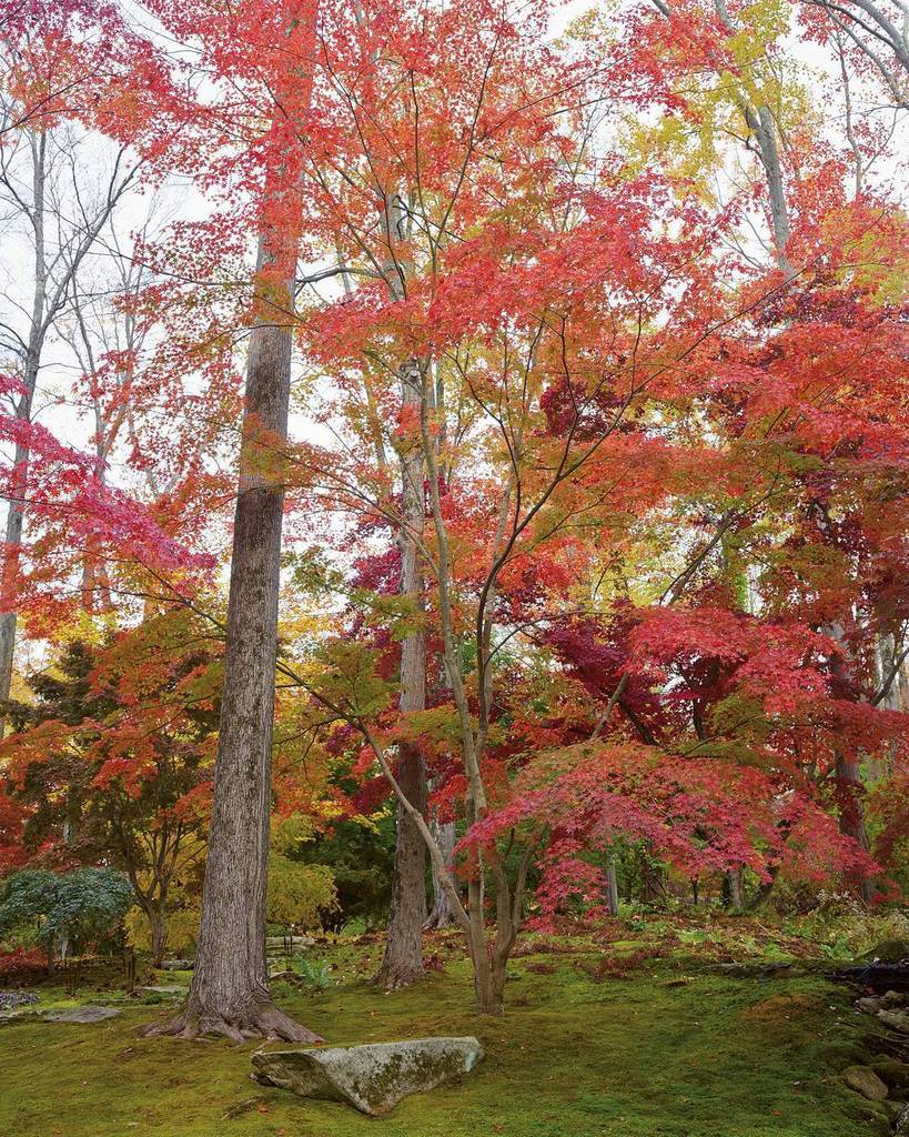 Abrams Books On Twitter Happy First Day Of Fall Iroki The