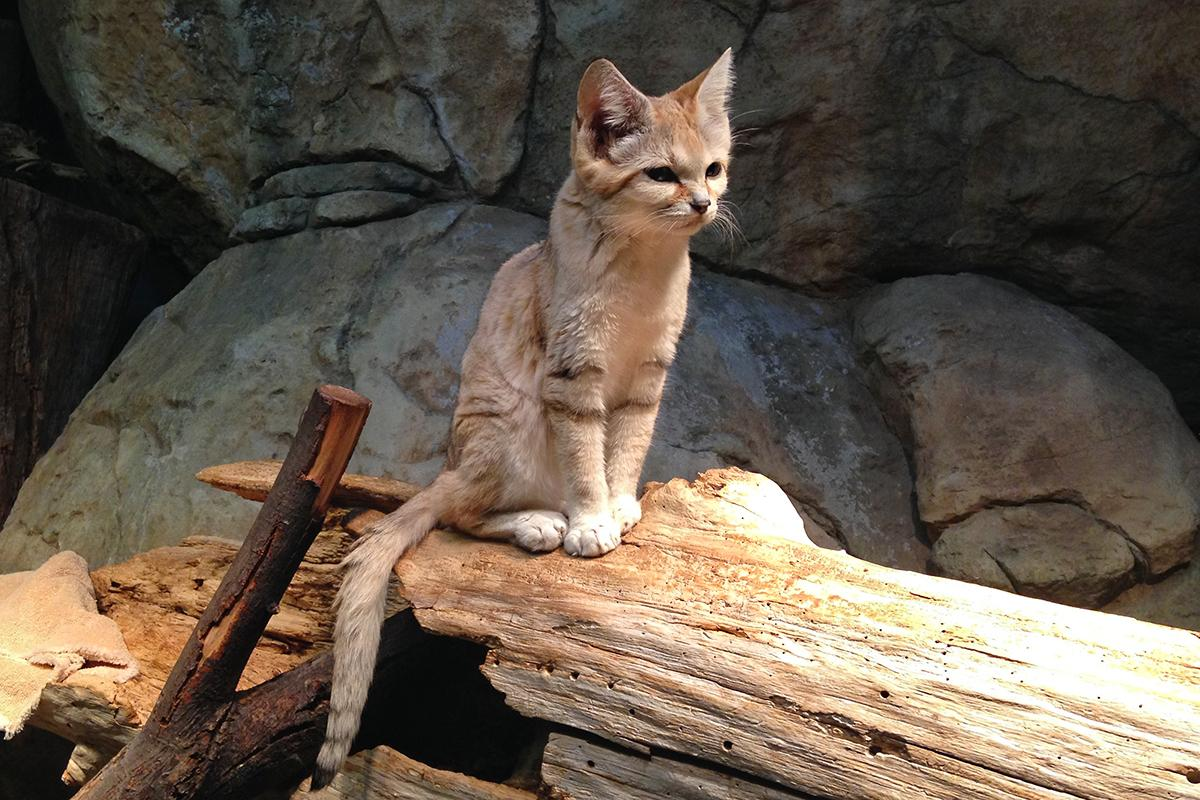Image result for lincoln park zoo cat house