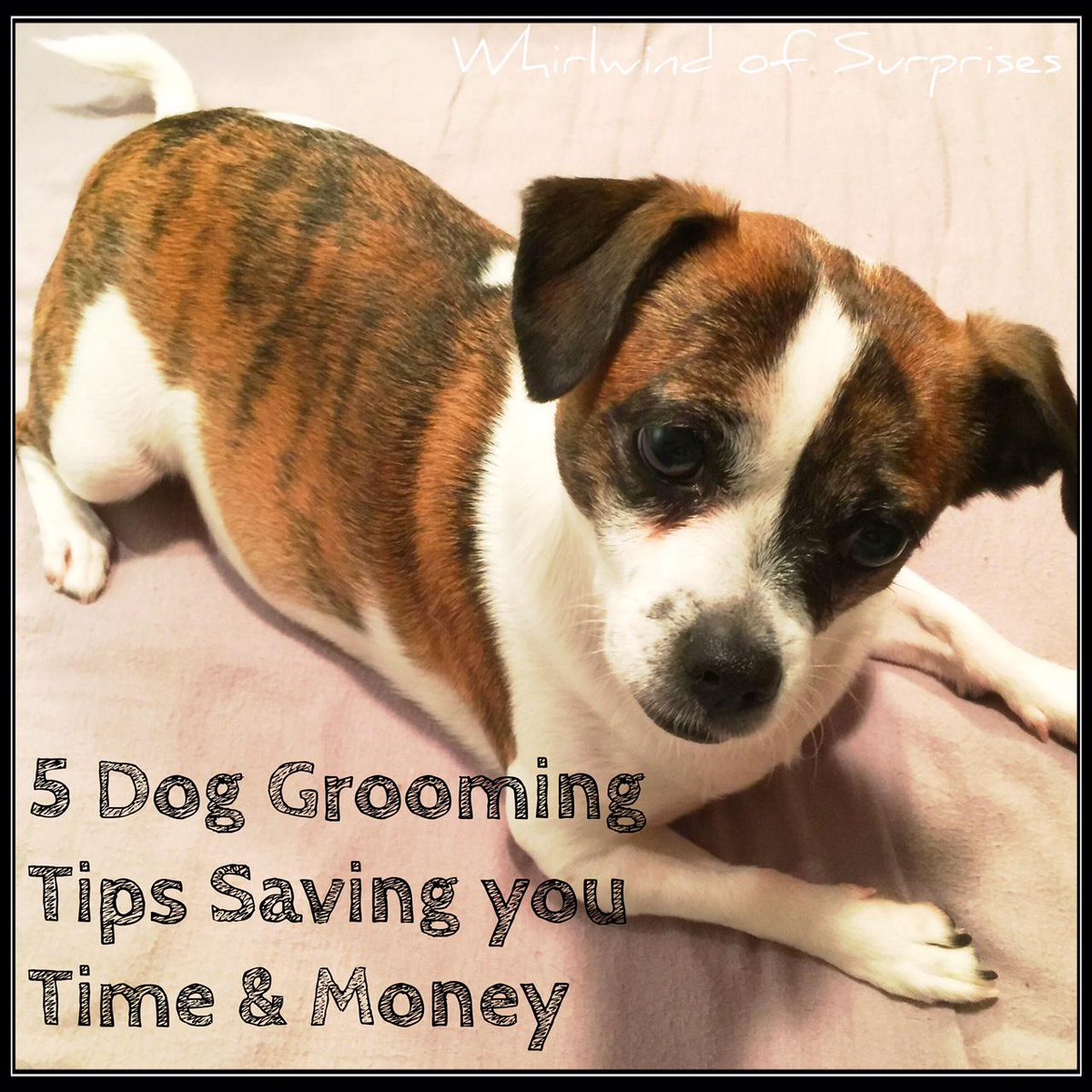 Grooming Tips, CHI for dogs review