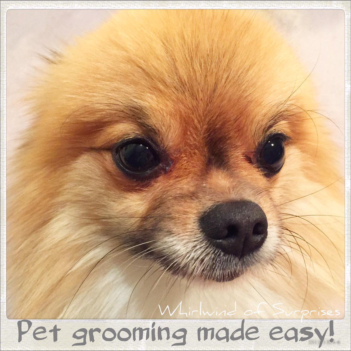 Dog Grooming Tips, CHI for dogs review