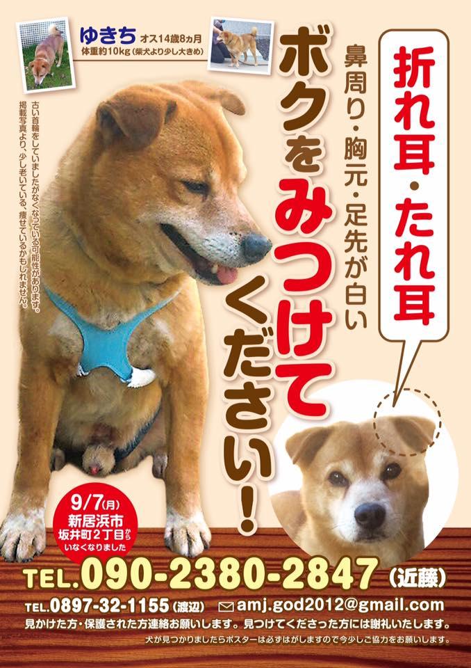 愛媛県新居浜市の迷い犬です。 http://t.co/LcN39zKfpY