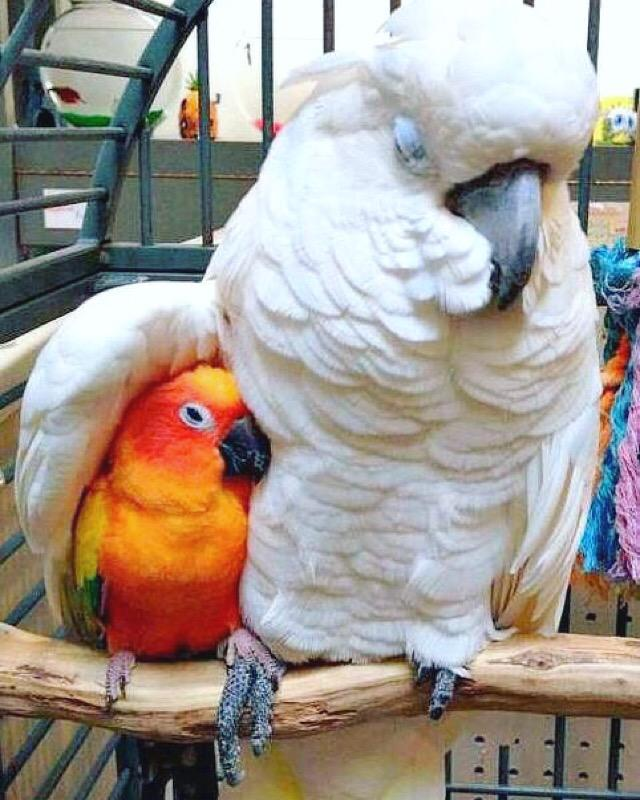 maverick the parrot pictures to pin on pinterest   pinsdaddy