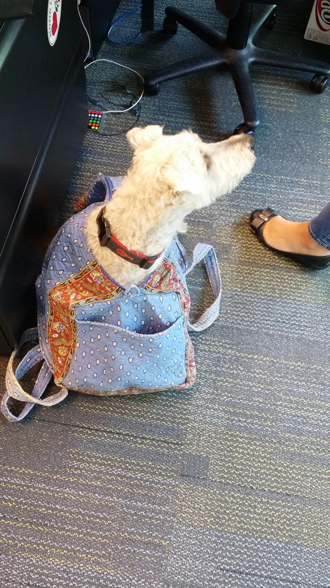 Someone snuck their dog into the office today....in a bag.  It was awesome seeing Moe today. http://t.co/LzB05rcn8r