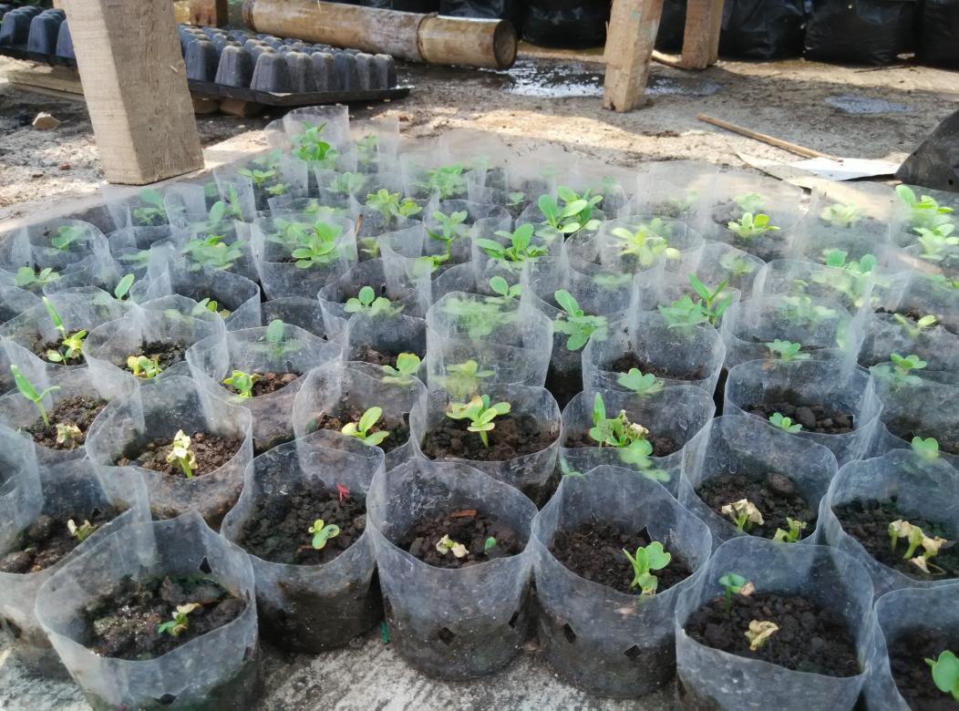 Kebun Duit Di Lahan Sempit - AnekaNews.net