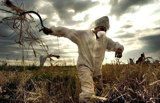 Comunità Maya e ONG denunciano Monsanto per la soia transgenica a Campeche in Messico