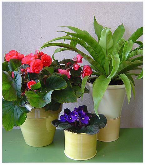 Отличные удобрения для комнатных цветов я покупала тут http://t.co/Pm4rWmGTA8 Выгодные цены. Рекомендую! #АбсолютСад http://t.co/GIlYilKbnL