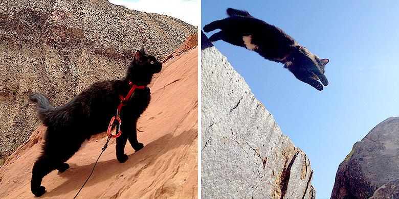 Millie The Cat Is So Adventurous She Goes Rock Climbing In Utah With Her Owner http://t.co/Cil8CFN81p http://t.co/XFnyEueXBp