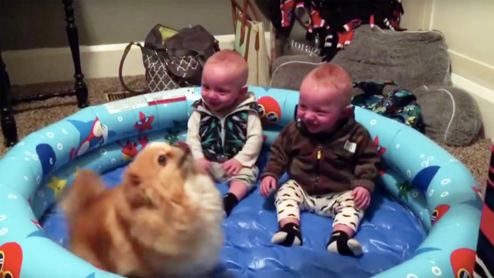RT @mashable: Warning: toddler twins laughing at their dog is highly contagious http://t.co/jRCJiI9Lzb http://t.co/dGzdi0T2it