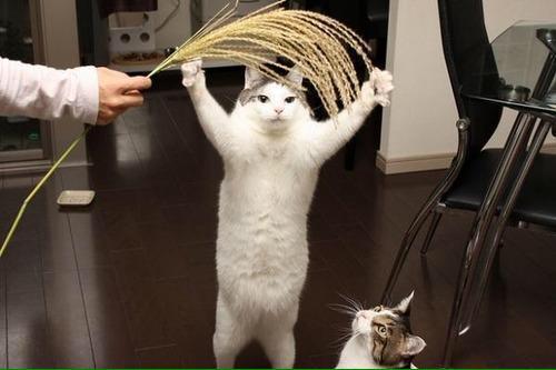 【話題の画像】五穀豊穣を… https://t.co/BiKU9apcv5