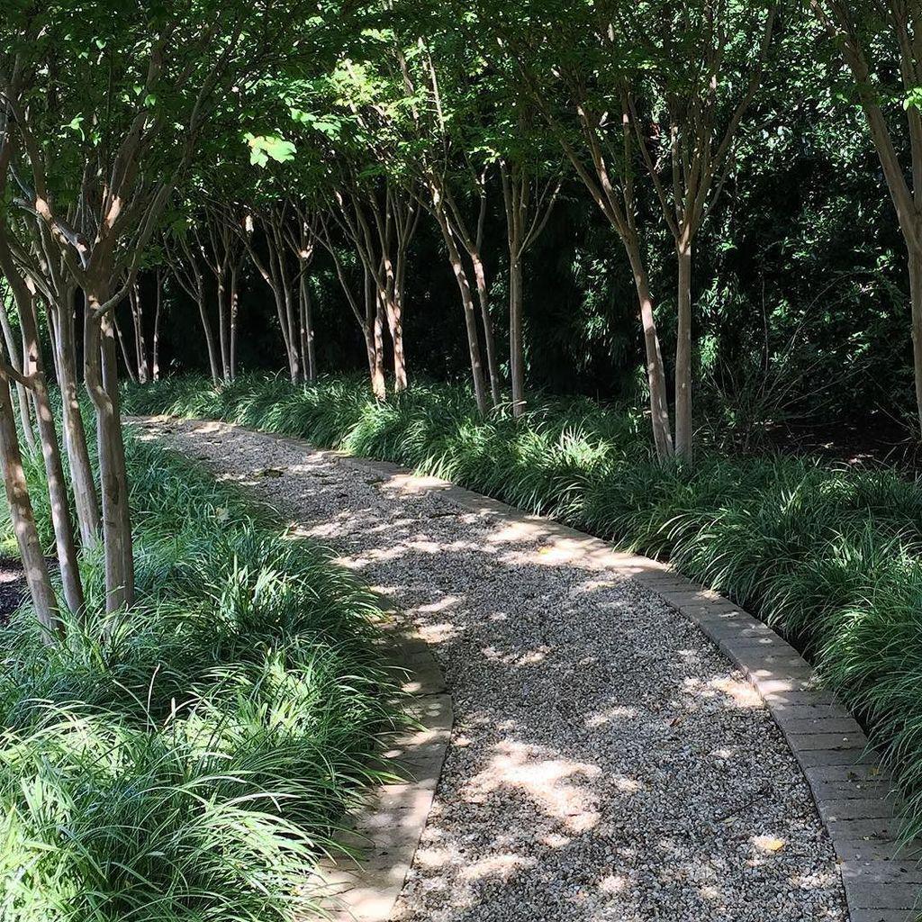 Lovely curved crape myrtle allee. #APLD15  #plantingdesign #apld #landscapedesign #landsca… http://t.co/8MfqtUpD4M http://t.co/ELpRroJkEX