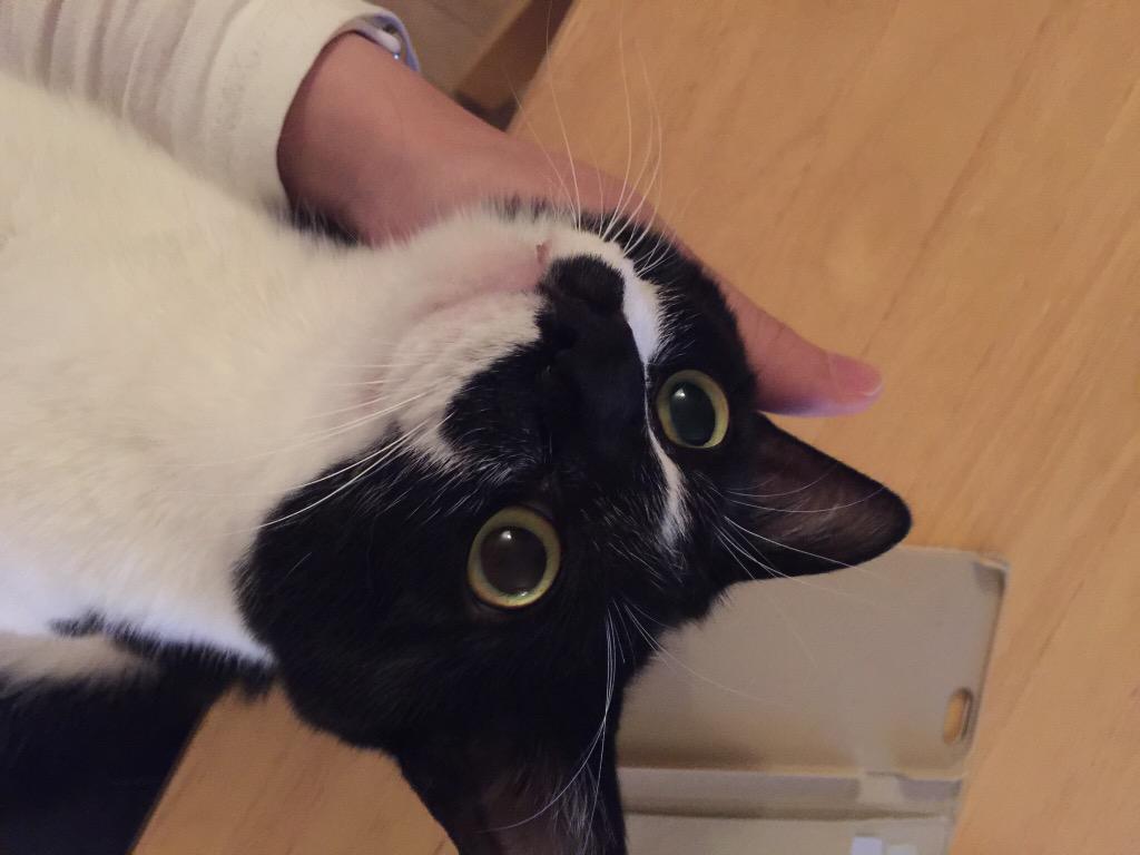 帰り遅くなったお詫びに死ぬほど撫でてあげたら放心状態になった猫rikkusora.com/rikku/nadeneko pic.twitter.com/xgJzXVdycX