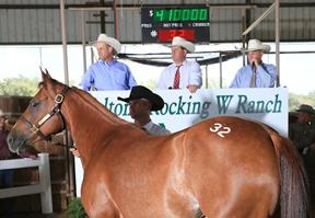 Record $3.2 Million for Walton's Rocking W Ranch Dispersal: http://t.co/pVQ1fv5BeK #Horses #ForSale $$$ http://t.co/ZNfHHlMnTM