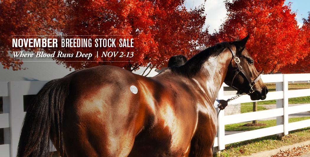Keeneland Breeding Stock Sale
