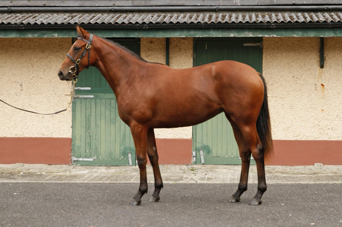 Goffs Orby Sale 2015