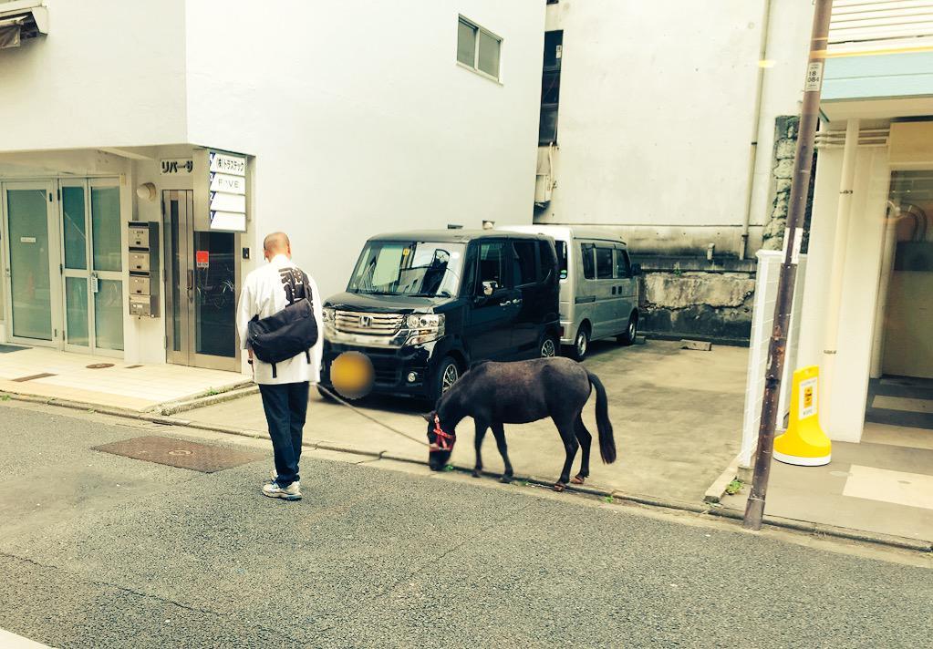 あれぇ?なんかあの犬デカイ...‼︎ と思ったら、神田明神の神馬『明かり(あかり)』ちゃん♡ お店の前をお散歩中〜〜
