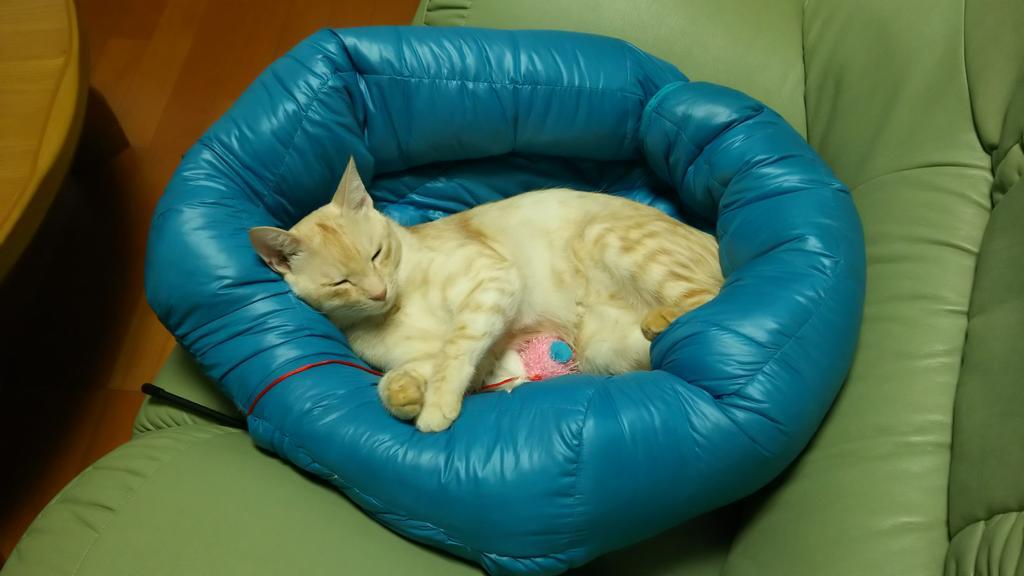私のユニクロのダウンジャケットが、袖に綿を詰めて猫ベッドにリニューアルされました。 pic.twitter.com/iCon11Fp4c