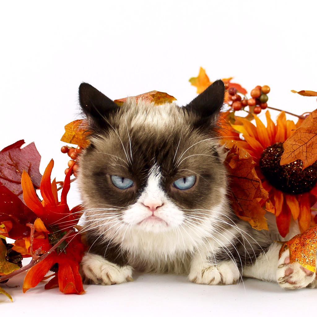Grumpy Cat Fall Meme