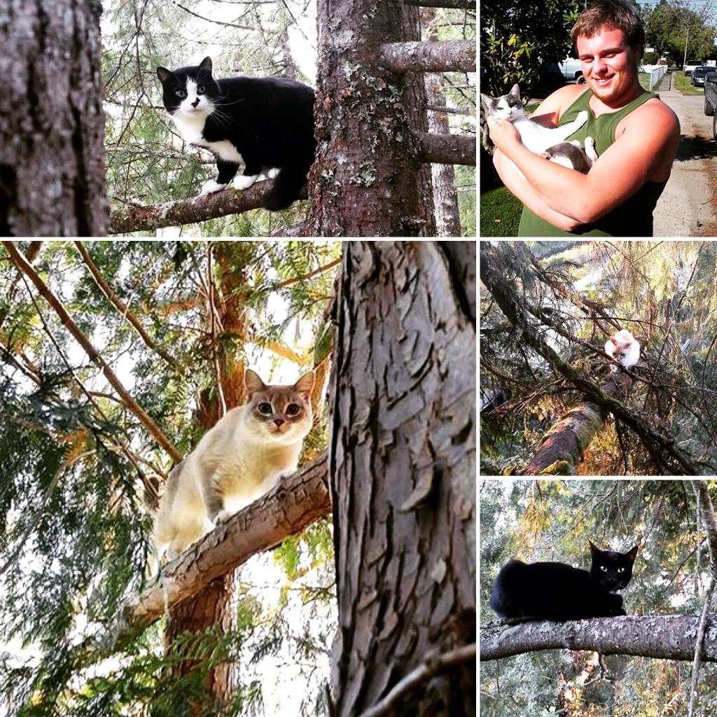 Canopy Cat Rescue on Twitter  Meet Adolf Butthead Ana Peckerhead u0026 Jinx. 5 of the 335 cats rescued this year! #treetopcatrescue @taylorswift13 ...  sc 1 st  Twitter & Canopy Cat Rescue on Twitter: