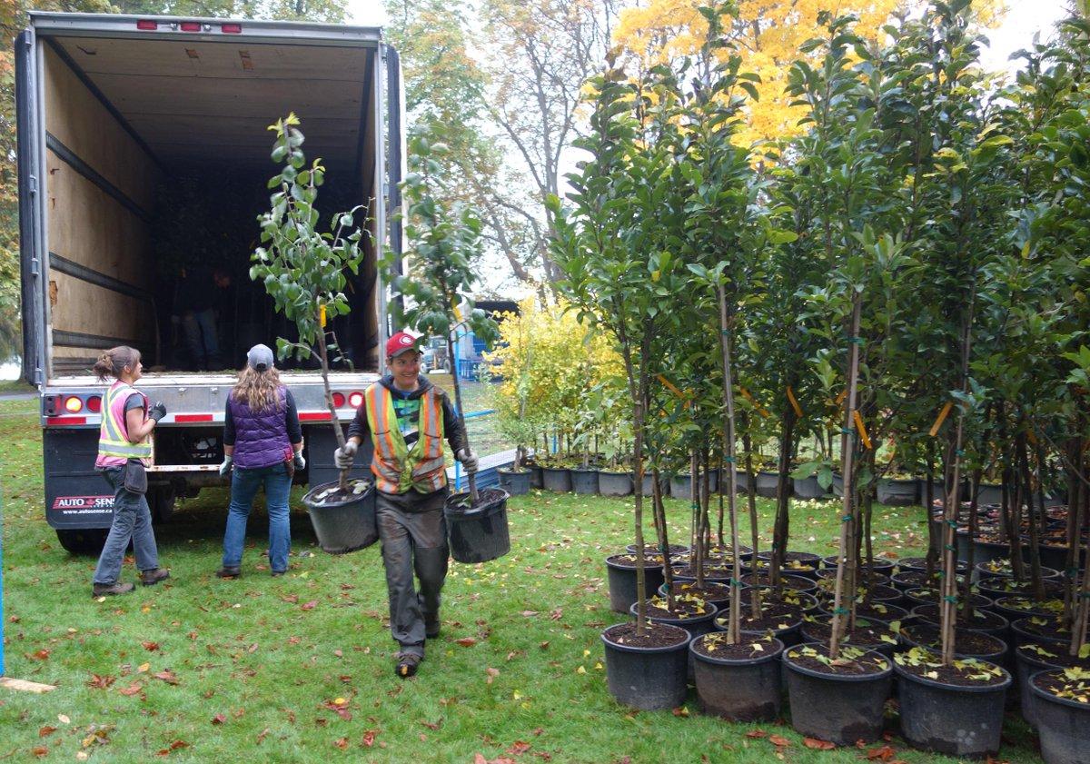 Take me home! Staff unloading trees for Oct 3 $10 tree sale @ Park Board office #DoorsOpenVan http://t.co/lrT0HFAQsT http://t.co/rOZUYZllgR
