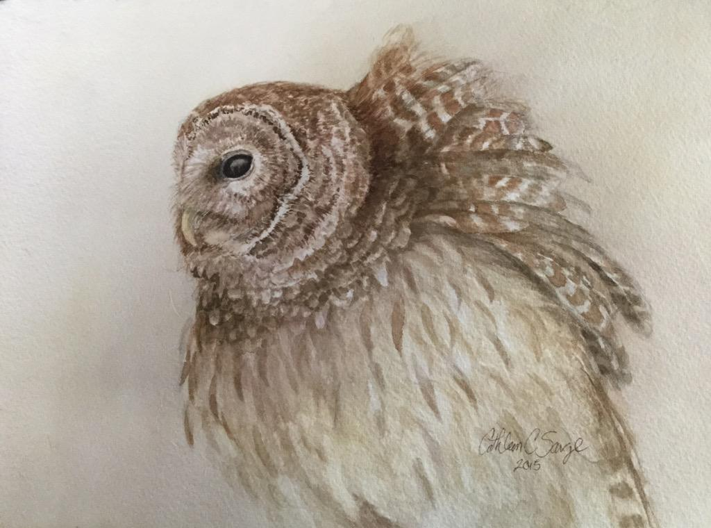 Here is a recent finish: Windblown Barred Owl for #TwitterFirstFriday http://t.co/T0ULfgshRQ